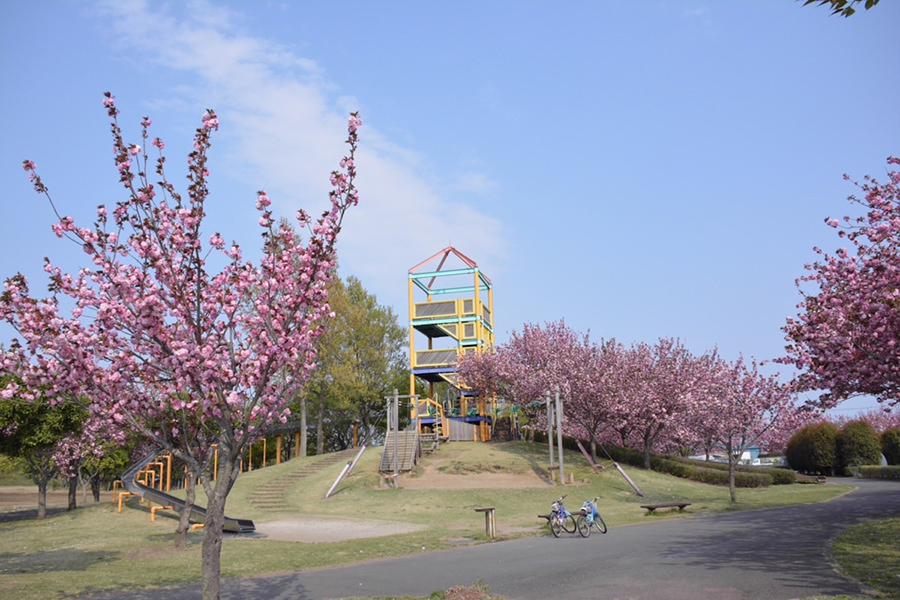 境町内の桜の木